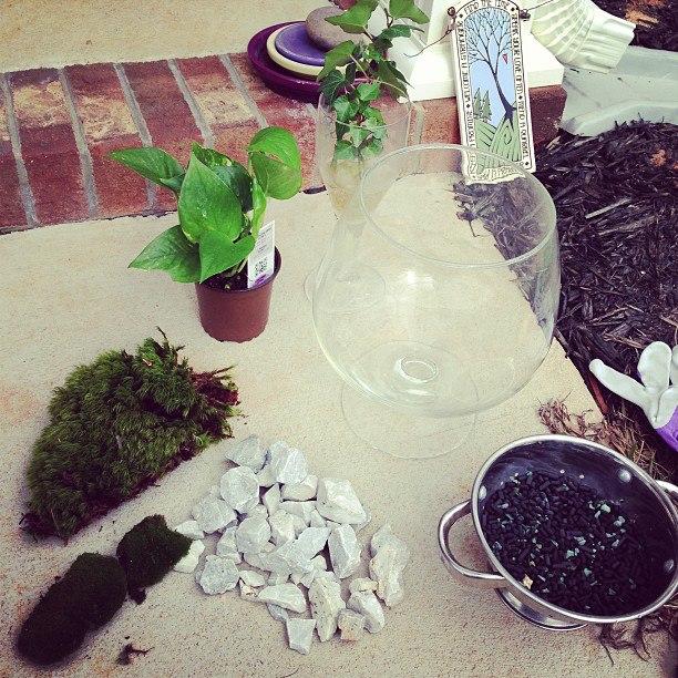 Terrarium materials: glass bowl, moss, plants, rocks, activated carbon